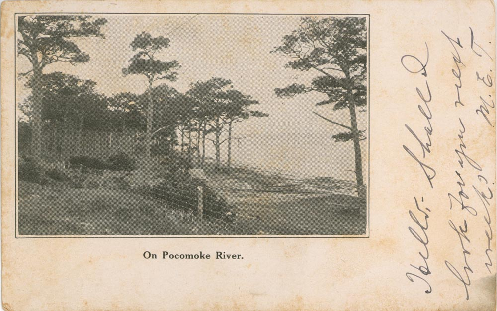 Front Side of Post Card, Pocomoke River
